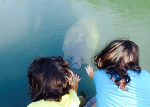 Antonella and Evangeline near the Manatee.  And no, they can't touch it.  Or take it home with them.
