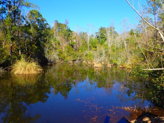 Marsh gator pond, sans visible gators