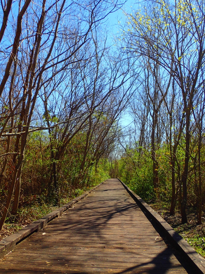 Nice short boardwalk trails
