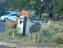 Mule deer. Apparently they can read signs now.