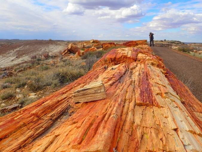 80 ludicrous feet of triassic era life