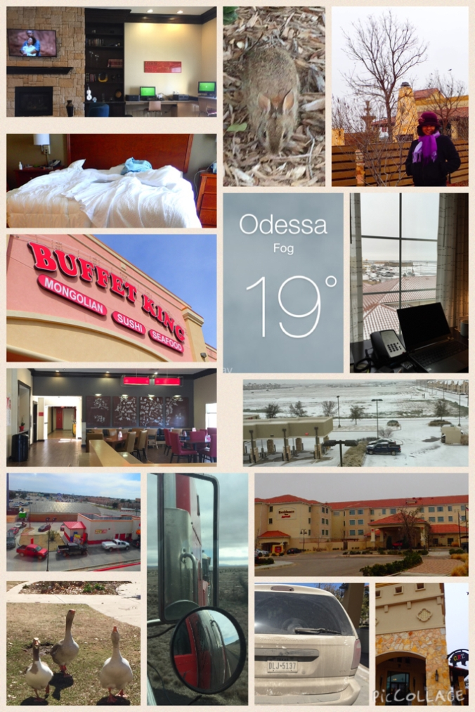 A collage of our Odessa stay: Two hotels, freezing temps, and bad restaurants, but at least we saw a rabbit.