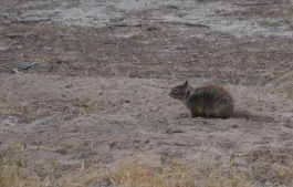 Some were so large I thought they were ground hogs