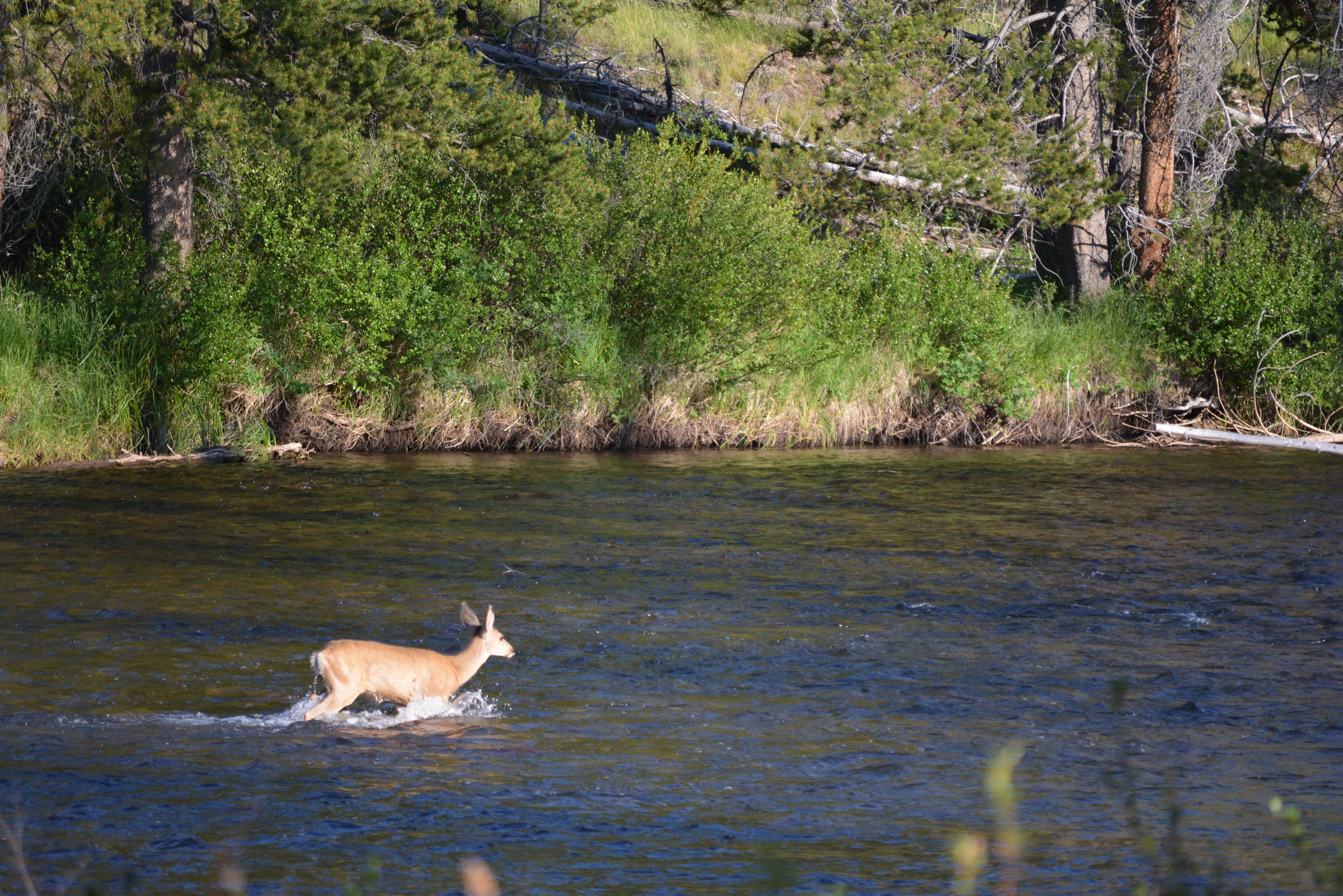 deer river Deer river tourism: tripadvisor has 309 reviews of deer river hotels,  attractions, and restaurants making it your best deer river resource.