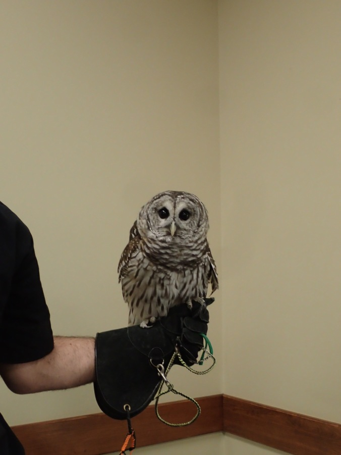 One of three owls at the presentation