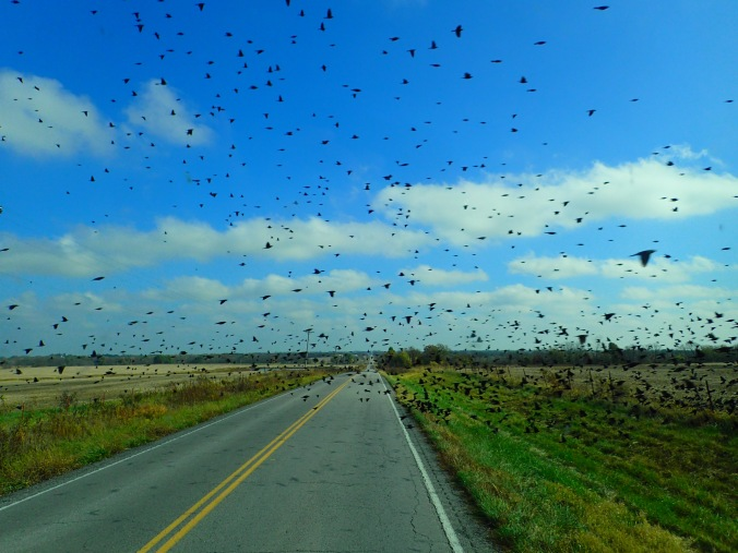 We weren't quick enough to capture the biggest of the swarms