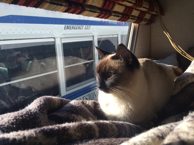 Kitty not happy when a tow truck put a broken school bus right beside us for the night.