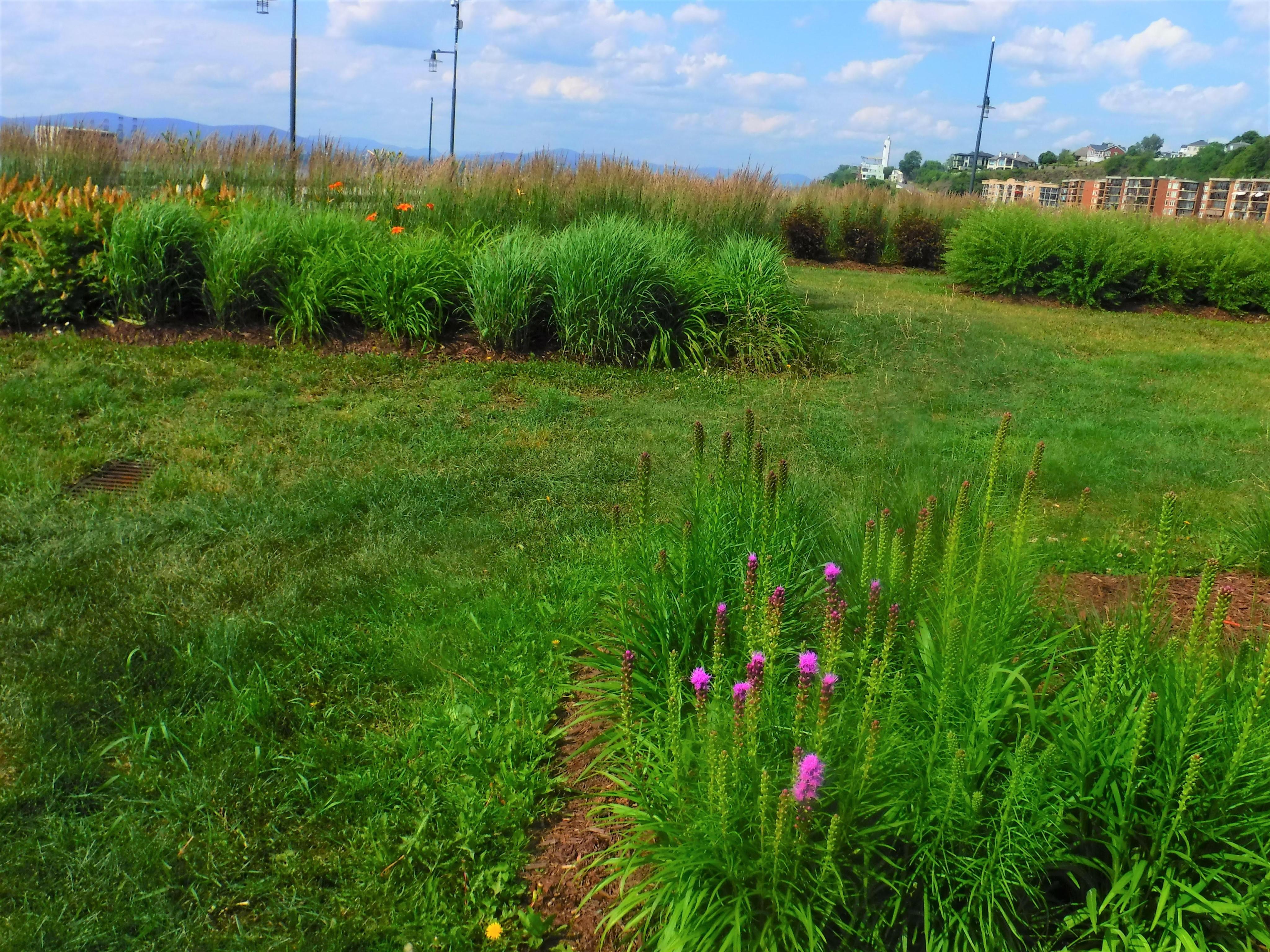 2-field-flowers