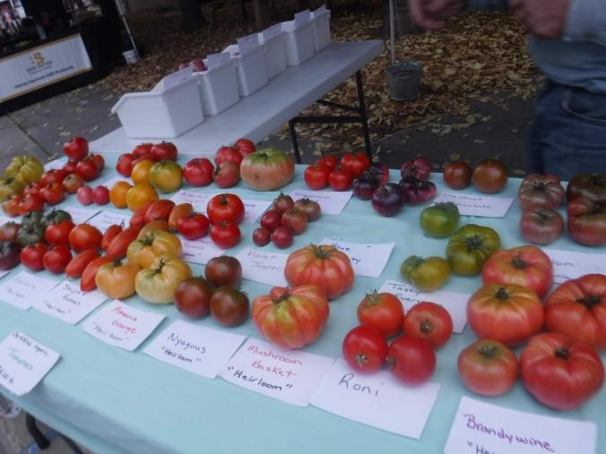 4-gbfm-tomatoes