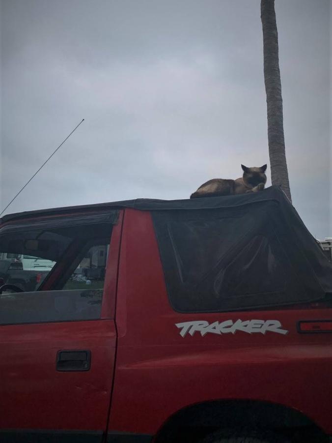 8-cat-geo