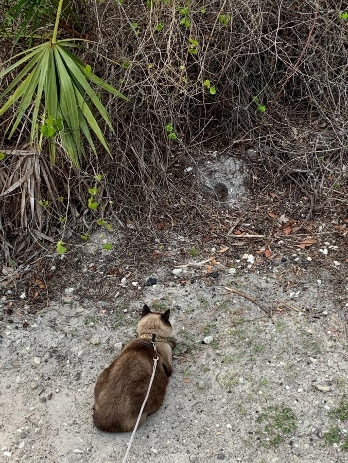 5-ksp-cat-rat