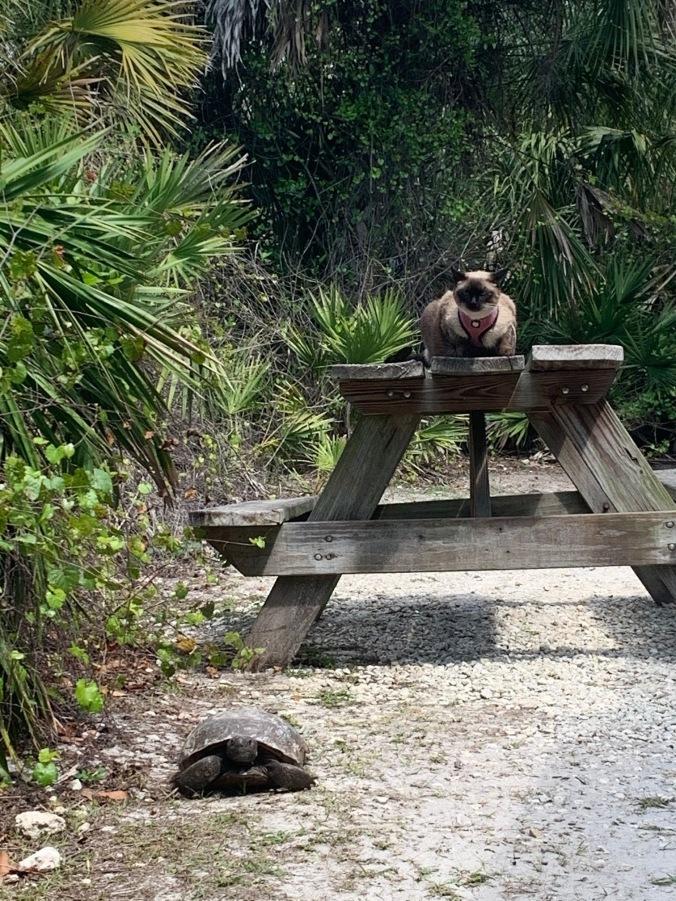 7-ksp-cat-tortoise
