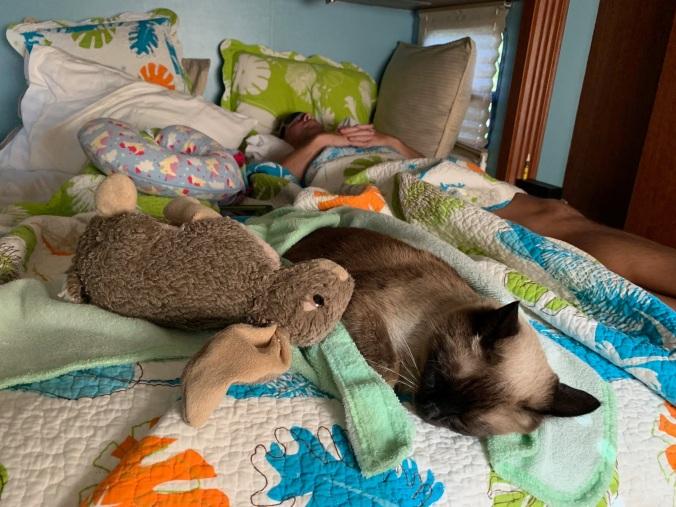 4-cat-bed