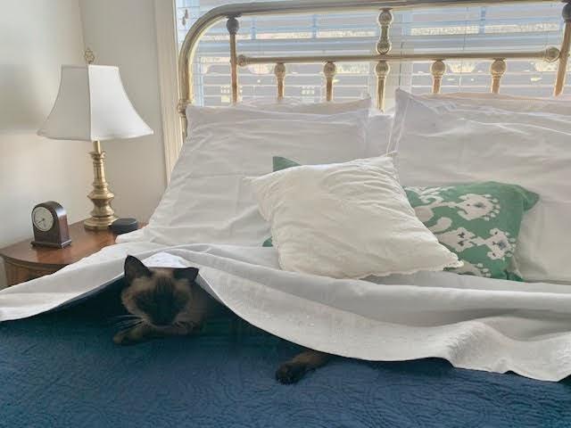 1-pkm-bed