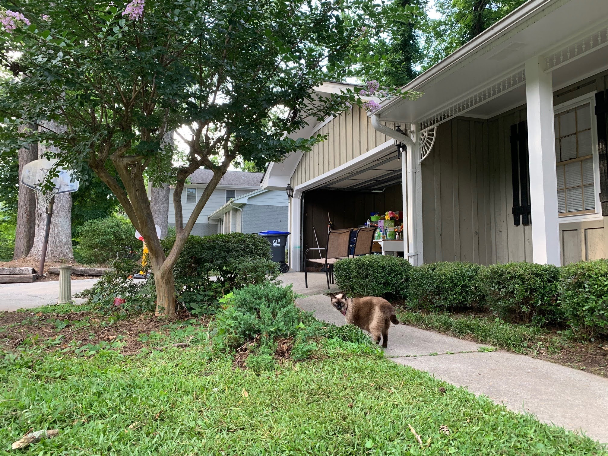 3-cat-front-yard