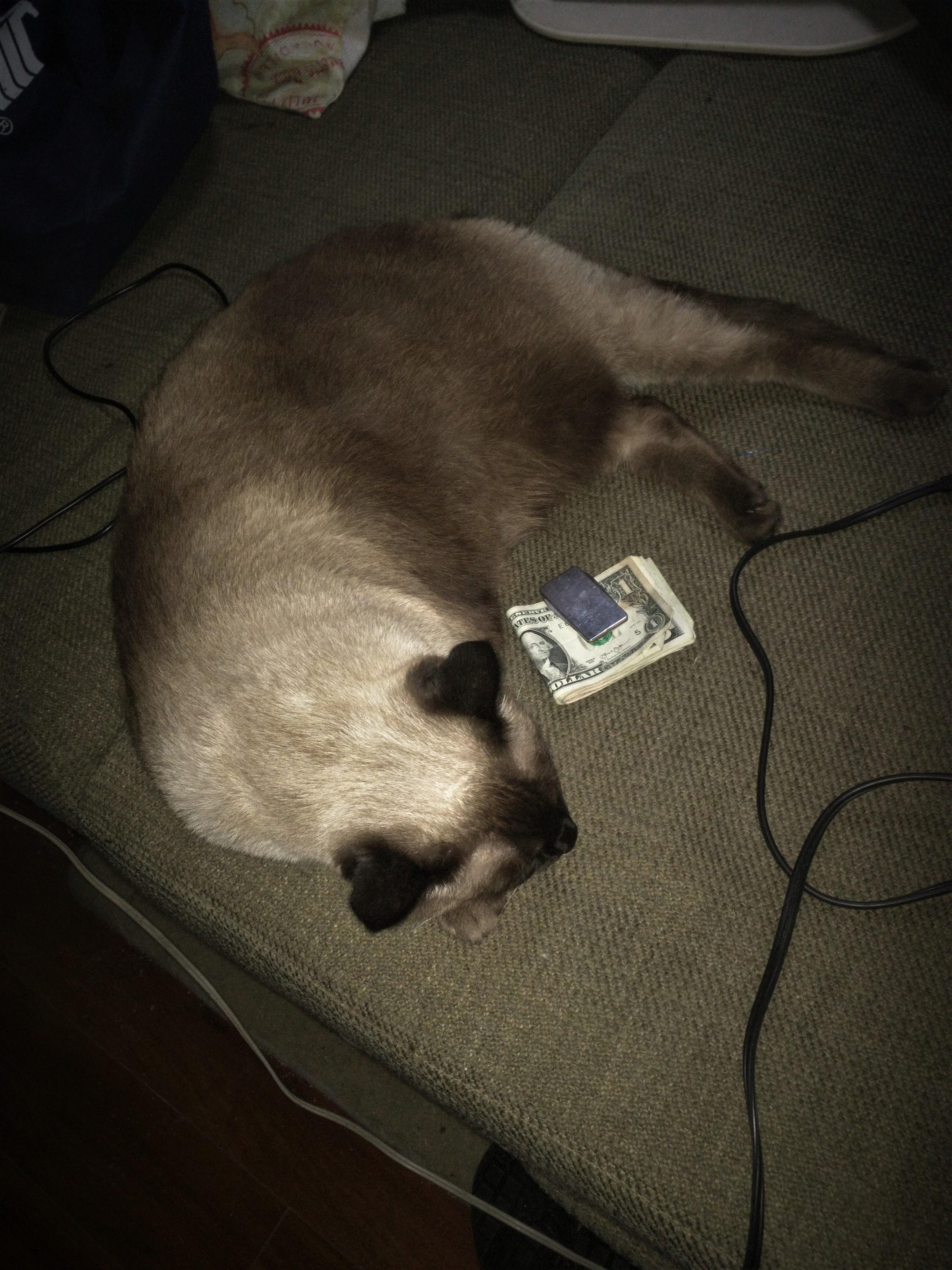 6-cat-money